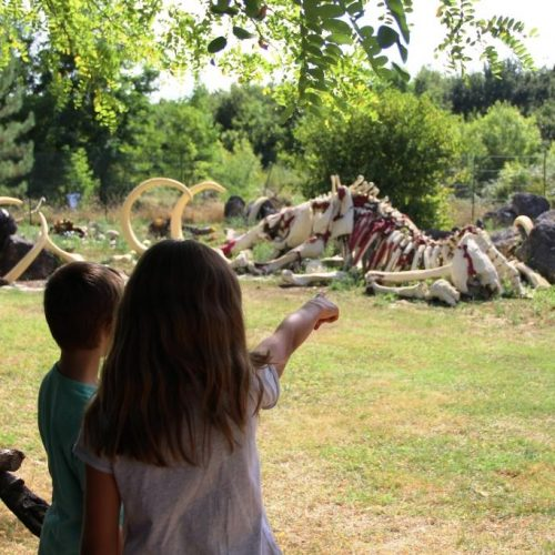 Émerveillement devant la reconstruction d'un cimetière de mammouths !