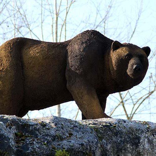Ours des caverne dans le parc du Paléosite