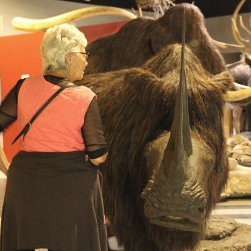 Peggy, le rhinocéros laineux