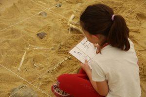 Initiation à la fouille archéologique